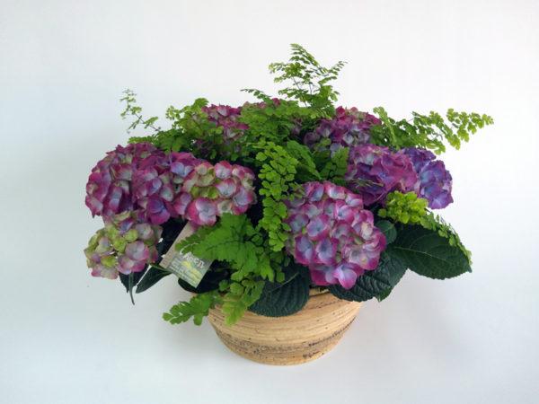Paarse-tuin